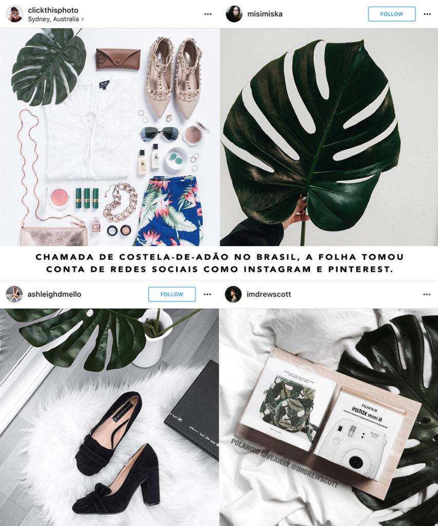 Costela de Adão Monstera Deliciosa tendência decor philodendron Oh My Closet por Mônica Araújo dica plantas.