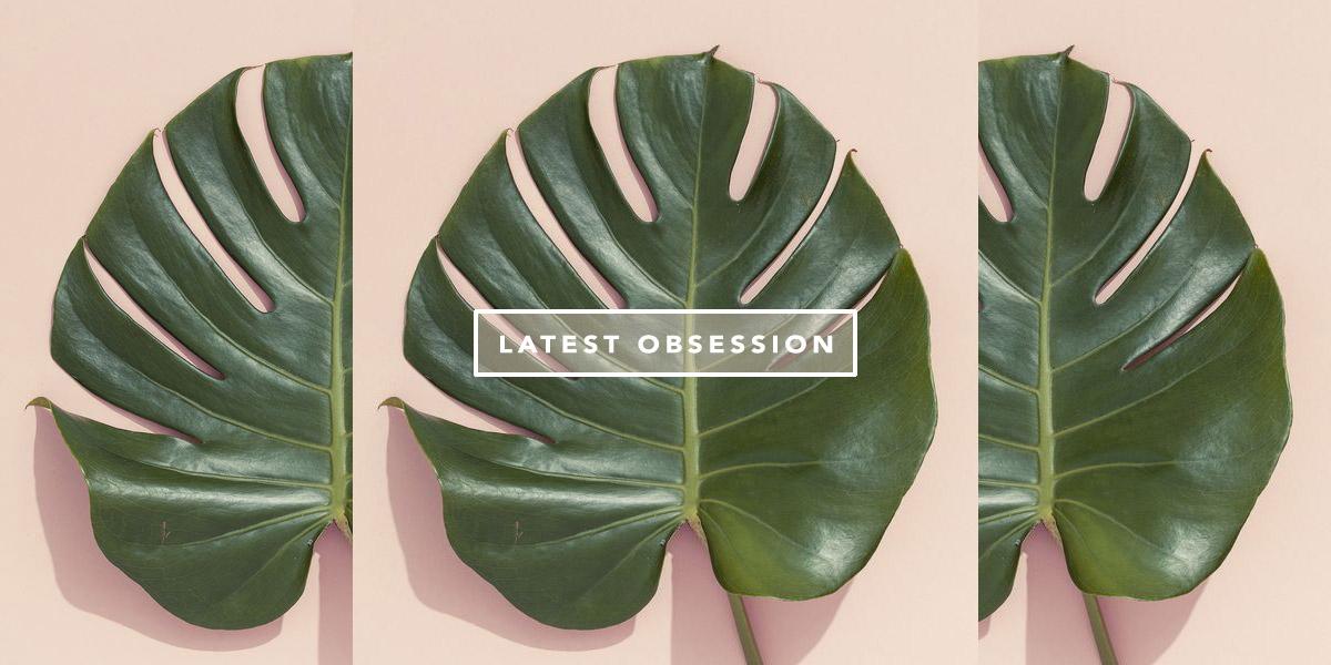 Costela de adão tendência decor Oh My Closet por Mônica Araújo. Veja Monstera Deliciosa, também conhecida como Philodendron.